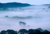 Mist in the Vale