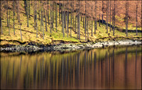 Haweswater Trees